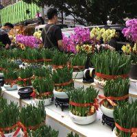 正月前に一番賑わいを見せる場所、香港フラワーマーケット
