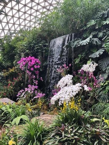 上海• 蘭の花が咲き誇る温室