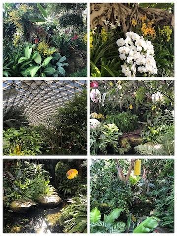 上海•南国ムードたっぷりの温室内展示