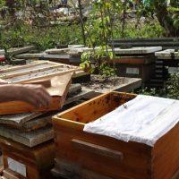 メイド・イン・ホンコンの蜂蜜