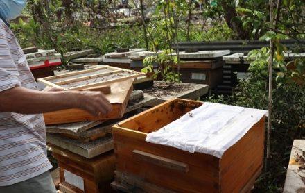 香港永和蜜蜂場