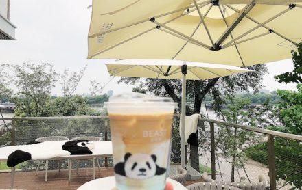 上海で大人気のパンダラテ