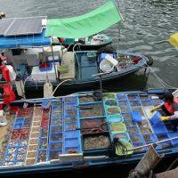 香港で海鮮を食べるならどこ?